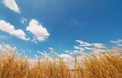 与草和蓝色的春天或夏天抽象自然背景 库存图片
