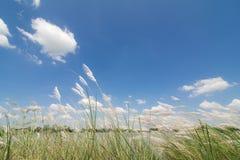 与草和蓝色的春天或夏天抽象自然背景 库存照片
