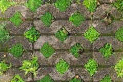 与草和青苔的石砖 背景,纹理 免版税库存照片
