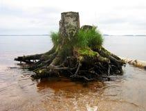 与草在水背景中,水平的看法的老绿色树桩 免版税库存图片