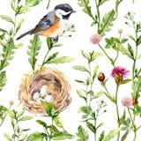 与草本、鸟和巢无缝的水彩的样式 免版税库存照片