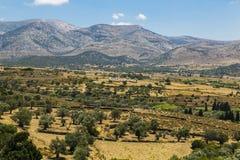 与草甸、山和蓝天,得墨忒耳临时雇员的希腊风景 库存图片