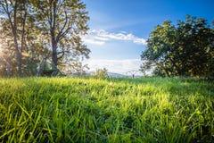 与草甸和树的美妙的风景绿色风景在蓝天,季节的变动,夏天前片树荫在温暖的11月 免版税库存图片