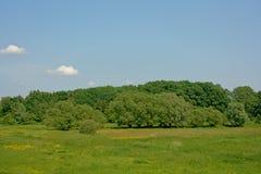 与草甸有黄色野花的和森林的佛兰芒风景在富兰德 免版税库存照片