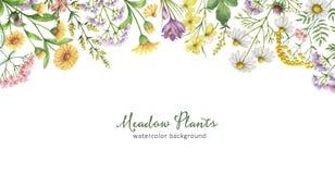 与草甸植物的水彩横幅 免版税库存图片