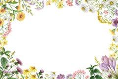与草甸植物的水彩长方形框架 免版税库存图片