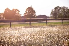 与草甸的乡下背景 免版税库存照片