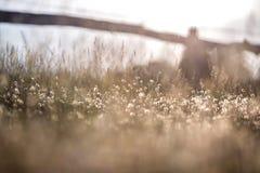 与草甸的乡下背景 免版税库存图片