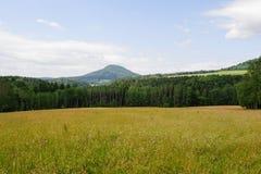 与草甸的美好的绿色风景 免版税库存图片