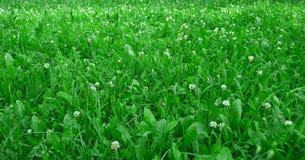 与草甸花的绿草 免版税库存照片
