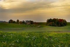 与草甸,母牛的秋天风景,上色了树 免版税图库摄影