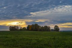 与草甸,母牛,下落的树的秋天风景 库存图片