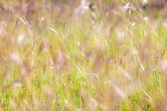 与草的夏天抽象自然背景在草甸 库存图片
