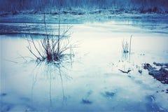 与草的大海风景 免版税库存照片