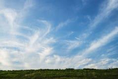 与草的天空 免版税库存照片