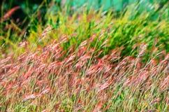与草的抽象自然背景 免版税图库摄影