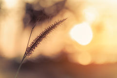 与草的抽象草甸背景在草甸和日落, 库存照片