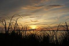 与草的日落风景在湖 库存照片