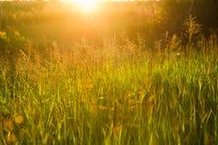 与草的春天或夏天抽象自然背景在我 免版税图库摄影