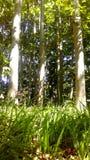 与草的林木 库存图片
