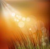 与草的田园诗秋天向量背景 向量例证
