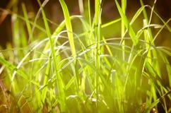 与草的自然抽象软的绿色晴朗的背景 库存图片