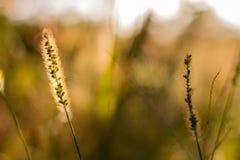 与草的花卉bokeh 免版税库存图片