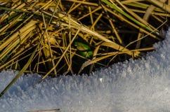 与草的雪水晶 免版税库存图片