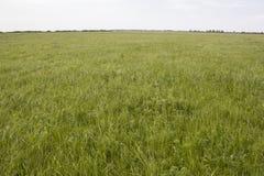 与草的领域 库存图片