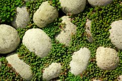 与草的鹅卵石背景 免版税库存图片