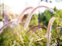 与草花的背景在草坪 免版税库存图片