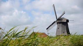 与草风景的荷兰绕环投球法 股票录像