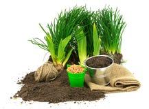 与草,地面,种子,金属桶,大袋的从事园艺的概念, 免版税库存图片