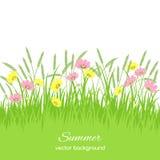 与草,花的春天卡片 向量例证