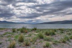 与草Achnatherum ne灌木的蒙古自然风景  库存图片