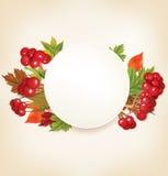 与荚莲属的植物和五颜六色的叶子的秋天横幅 免版税库存照片