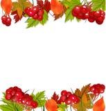 与荚莲属的植物和五颜六色的叶子的秋天背景 免版税库存图片