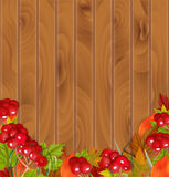 与荚莲属的植物和五颜六色的叶子的秋天背景 库存图片