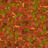 与莓明亮的多彩多姿的叶子的无缝的背景  库存图片