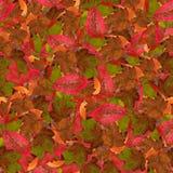 与莓明亮的多彩多姿的叶子的无缝的背景  图库摄影