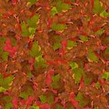 与莓明亮的多彩多姿的叶子的无缝的背景  免版税库存图片