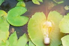 与莲花的电灯泡想法、成功和太阳能的 免版税图库摄影
