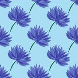 与菊花的无缝的样式在蓝色背景 免版税库存图片