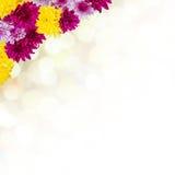 与菊花的背景 免版税库存照片