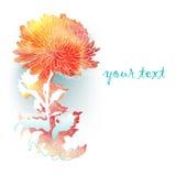 与菊花的水彩背景。 库存照片