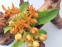 与萝蘑属花的一幅静物画 图库摄影