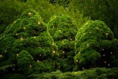 与萤火虫的蓬松绿色灌木 免版税图库摄影