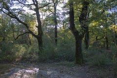 与落叶林和许多下落的叶子的五颜六色的秋季风景 图库摄影