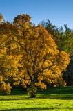 与落叶树的秋天风景在公园 免版税图库摄影