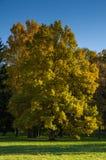与落叶树的秋天风景在公园 库存照片